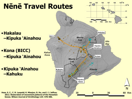 nene-travel-routes-lrg2